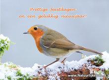 Goedkope kerstkaarten kopen, roodborstje, Christmas card robin, Weihnachtskarte Rothkelchen