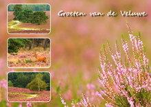 Ansichtkaart heide op de Veluwe, Postcard heather on the Veluwe, Postkarte Veluwe mit Heidekraut