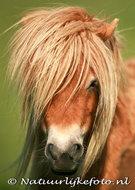 ansichtkaart paard kaart, horse postcard, Postkarte Pferd